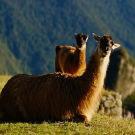 秘鲁攻略图片