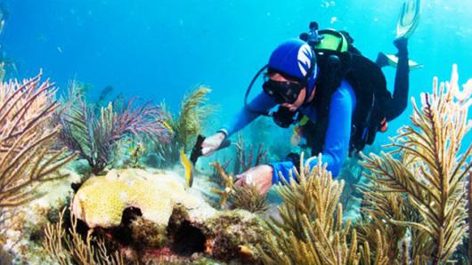 巴厘岛南湾种珊瑚+深潜+露露spa一日游(午餐+接送)