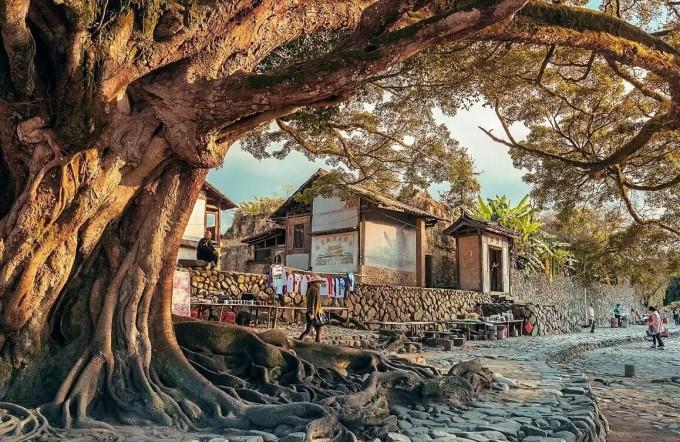一开始,有个清晨空镜头,大榕树,水碓,楼房.