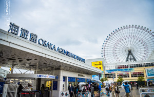 日本娱乐-大阪海游馆