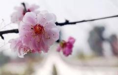 济南春天赏花好去处,济南春天赏花大全