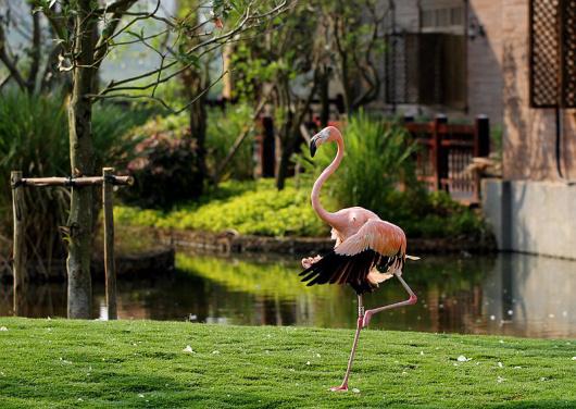 【海口出发】新年澄迈生态一日游 富力红树湾湿地公园