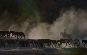 【北疆图片】【转场】看尘烟四起,听牧歌悠扬——大浪汪洋之北疆行