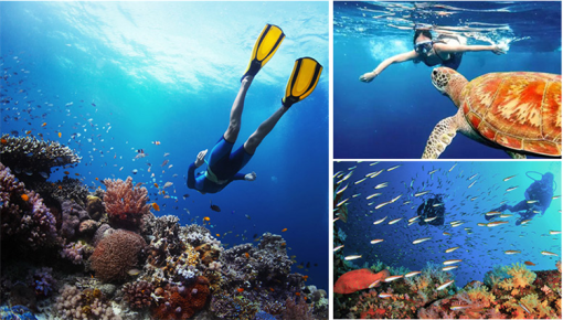 壁纸 海底 海底世界 海洋馆 水族馆 桌面 510_290