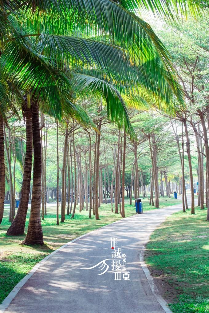 看夕阳的好地方 走在椰梦长廊,海风不像沙滩上那么猛烈,阳光也被椰树