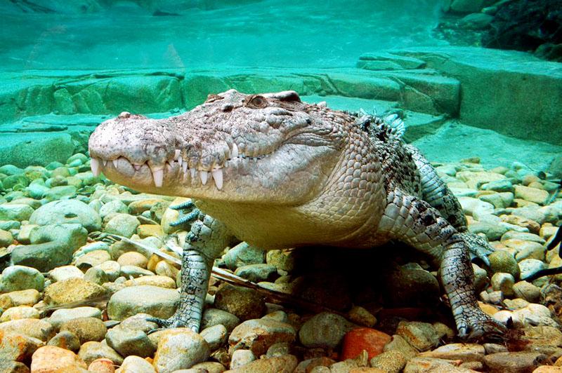 在这里有澳洲所有的特色动物,袋鼠,考拉,还有鳄鱼和蟒蛇等等.