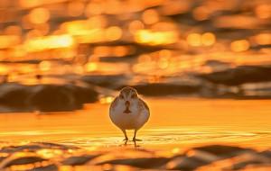 【盐城图片】盐城条子泥~鸟儿的天堂