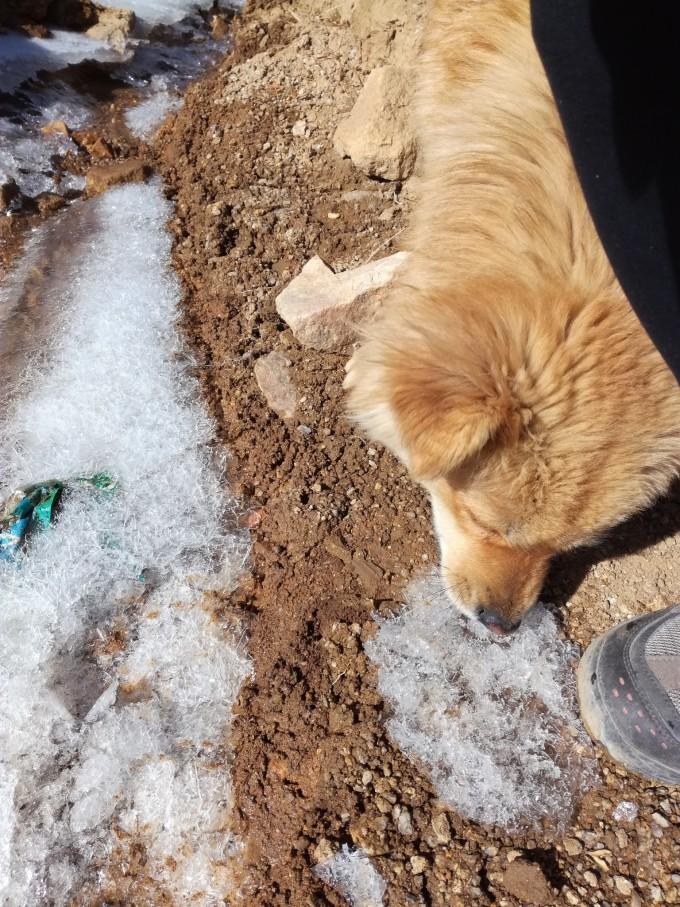 轻泥土动物制作