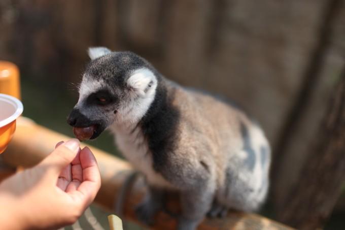 北京周边游:北京野生动物园 固安福朋酒店 周末遛娃好