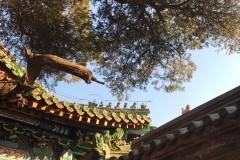 说说我最爱的【北京】南海子 石林峡 青龙湖 芳草地 喇叭沟 妙峰山 国子监 罗马湖