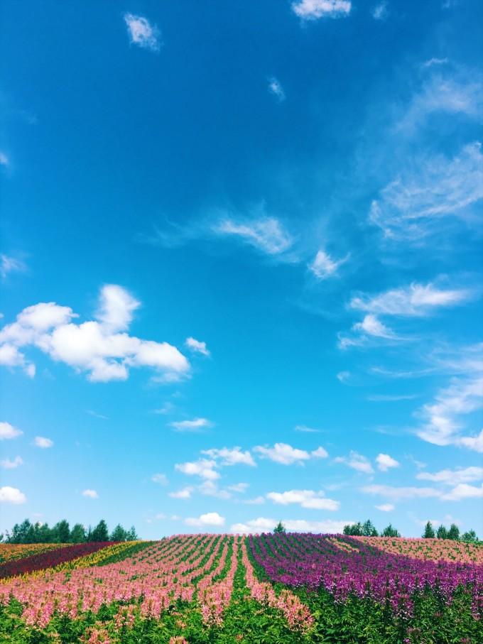 在夏天的北海道看最美的星空和花田
