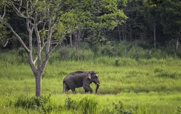 考艾国家公园和曼谷野生动物园?