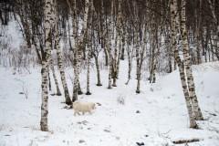 【带狗自驾】逃离雾霾,邂逅崇礼——  冬天我欠你一场说走就走的旅行