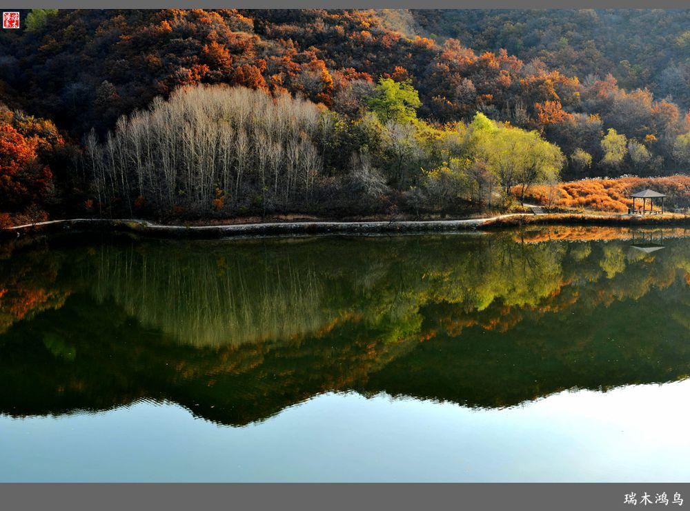 汇聚线树林摄影作品