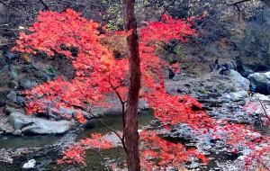 【清原图片】万山红遍,层林尽染的辽宁清原筐子沟