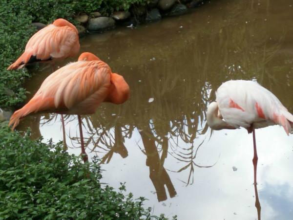 昆明亲子游--圆通山动物园