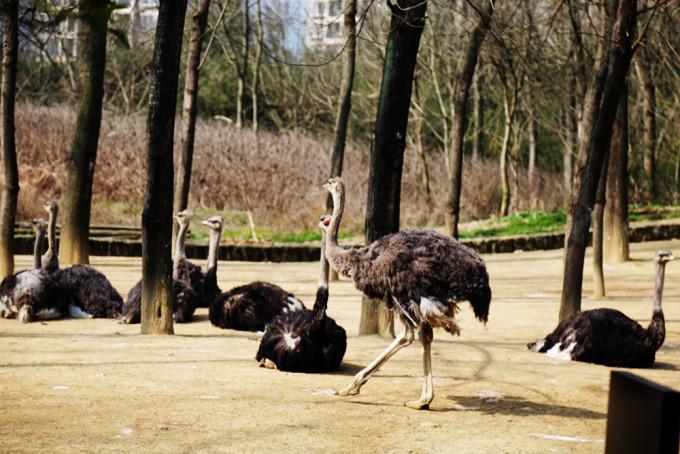 顺带杭州野生动物园