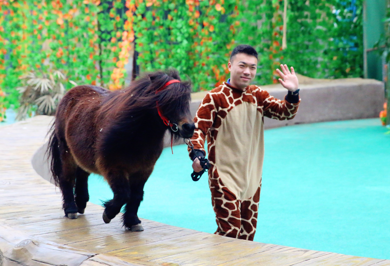 常州淹城野生动物园门票 淹城野生动物世界门票 含国际大马戏 园区