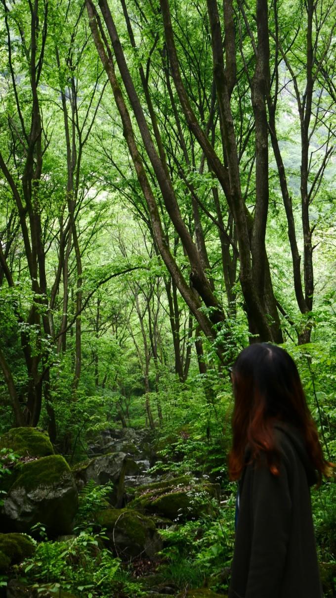森林一抹阳光图片