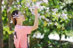 广州 ☆ 风吹紫荆树,色与春庭暮