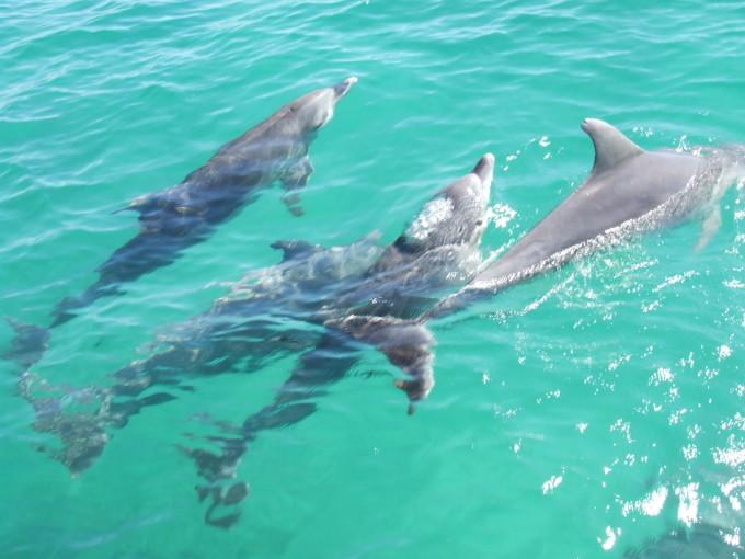 白描海豚创意图片
