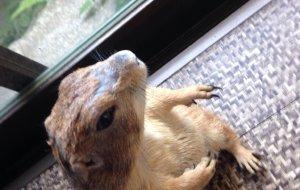 神户娱乐-Hedgehog Tea Room