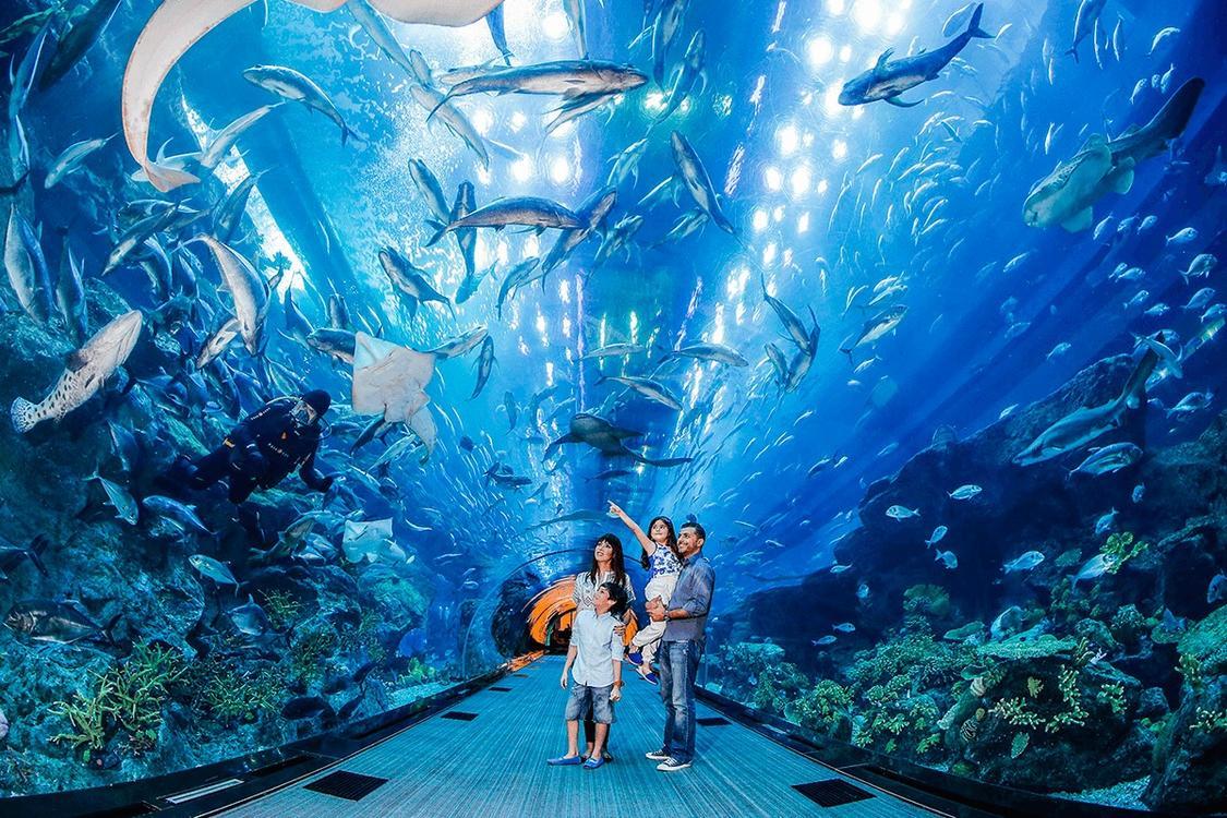 迪拜亚特兰蒂斯水上冒险乐园 失落的空间水族馆 极速出票 亲子玩嗨整个夏季