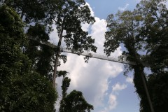 云南游记之五 ------ 游览热带雨林望天树景区,畅游神密的南腊河,踏上树冠走廊(上)