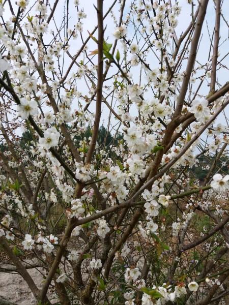 瀑布,汛期时因草木茂盛,山路难走,最佳观赏季节是春节前这段时间