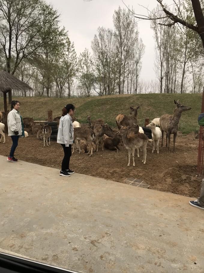 清明小长假——固安建国温泉,北京野生动物园2日游
