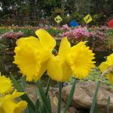 福州西湖公园图片