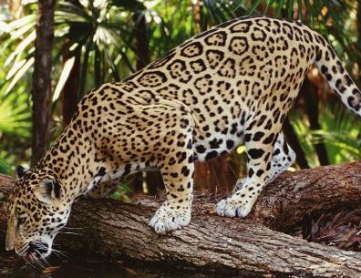 长沙生态动物园车行放养区位于园区东北部,占地500亩,分为车行猛兽区