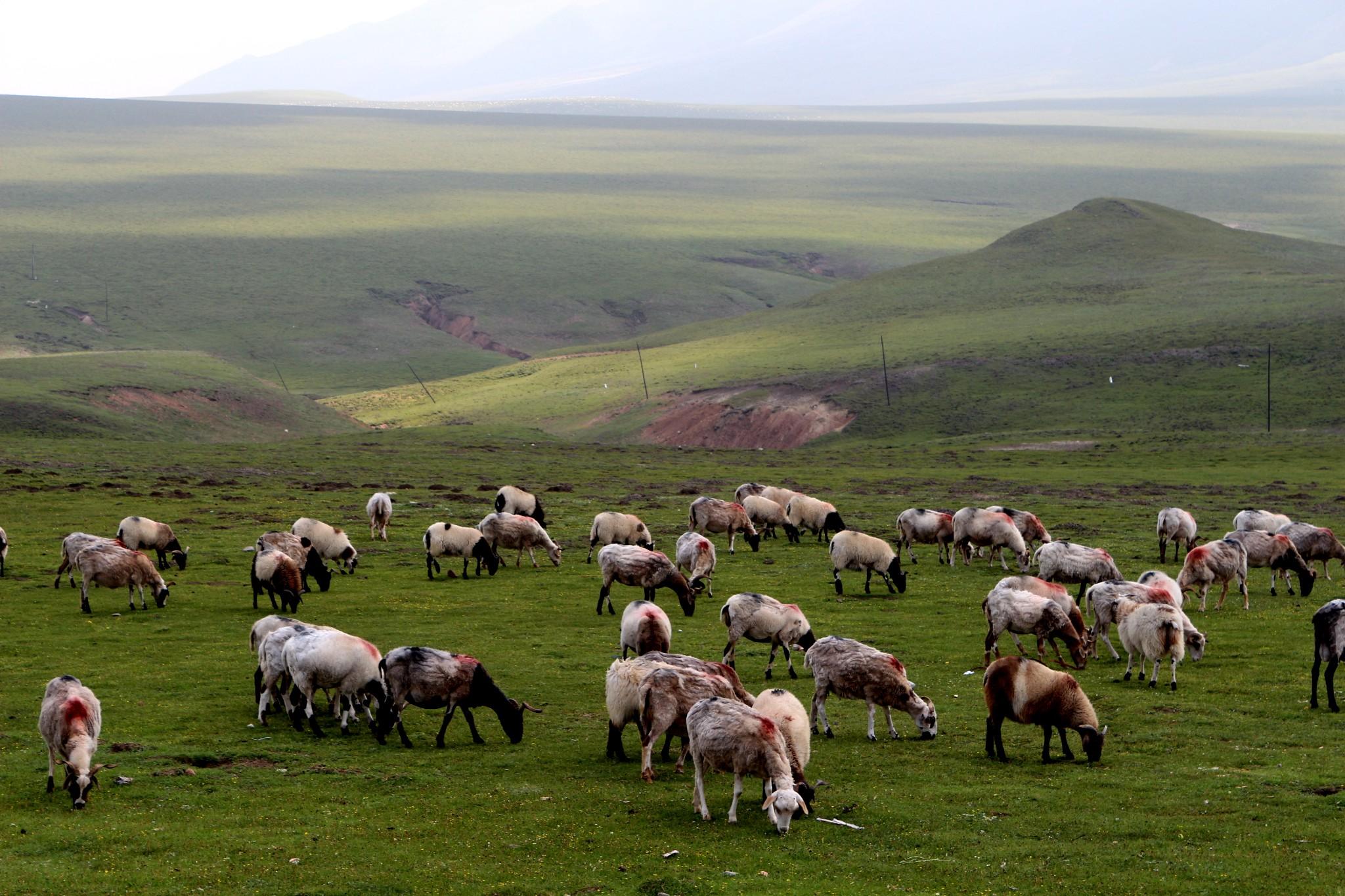 去西北的青海甘肃大环线游玩不容错过的10个景点