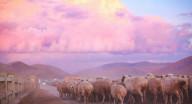 呼倫貝爾草原5日游多少錢,呼倫貝爾草原5日游路線
