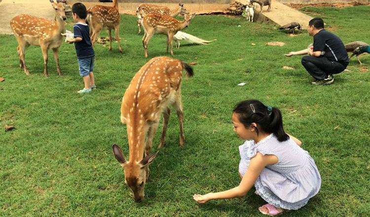 武汉九峰森林动物园大门票九峰森林动物园门票成人票