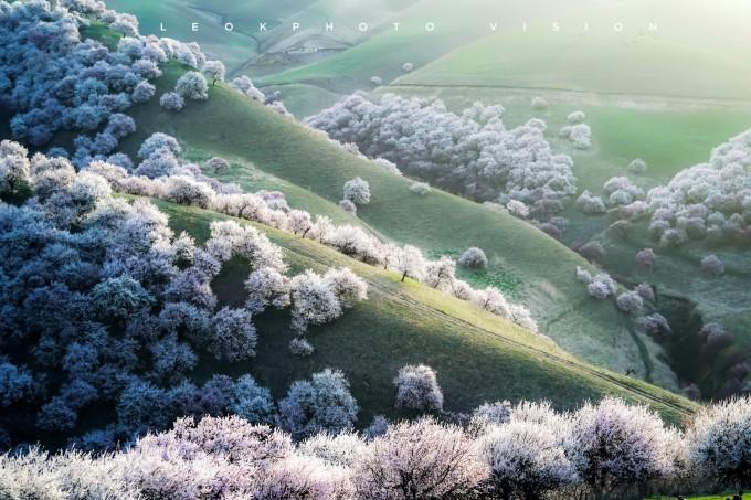 杏花沟野果林风景区