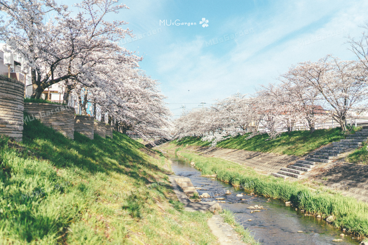 #春天就要出去浪 7天暴走19万步,带回128G的日本樱花季美景