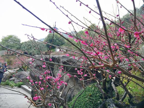 根博园—根雕根宫佛国的初春