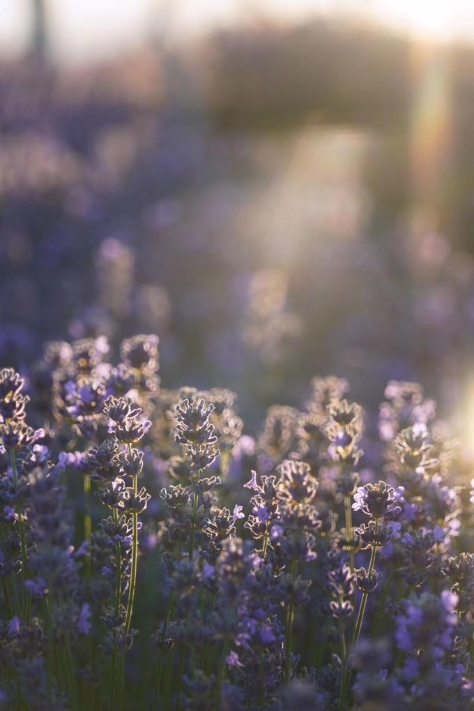 深呼吸新疆の夏——仲夏夜 草原、森林、湖泊、花田浪哩个【新疆自助游yabo88亚博官网】