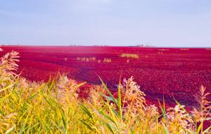 【盘锦图片】九月的芬芳,迷醉在百里红海滩