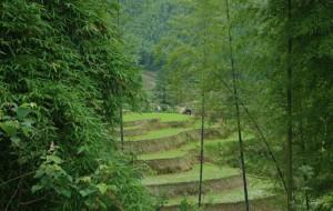 【崇义图片】感受美景的回乡之旅