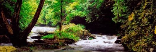 浏阳大围山国家森林公园一日游 (负氧离子之旅)