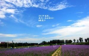 张北娱乐-千紫薰衣草花田