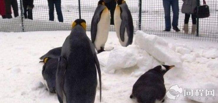 陶然亭企鹅style冰雪王国