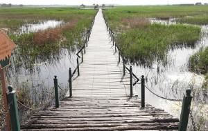 【白城图片】恨铁游记:吉林白城莫莫格湿地
