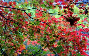 【锦州图片】追寻秋天的脚步:国庆辽东半岛自驾游
