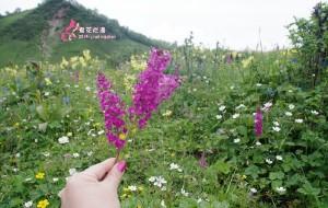 【茂县图片】露营初体验|夏花烂漫九鼎山【6.28~6.29】