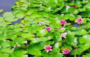 【枣庄图片】2015年图记----周末出行之红荷湿地
