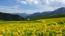 青海湖景点-祁连山草原