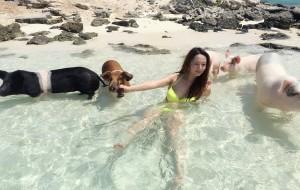 【巴哈马图片】巴哈马 exuma 猪岛